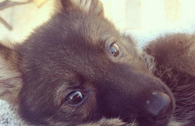 loran conrad - puppy
