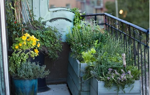 How To Grow Vegetables On Your Balcony Shemazing