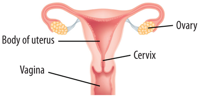 cervical check shemazing  : diagram of cervix - findchart.co