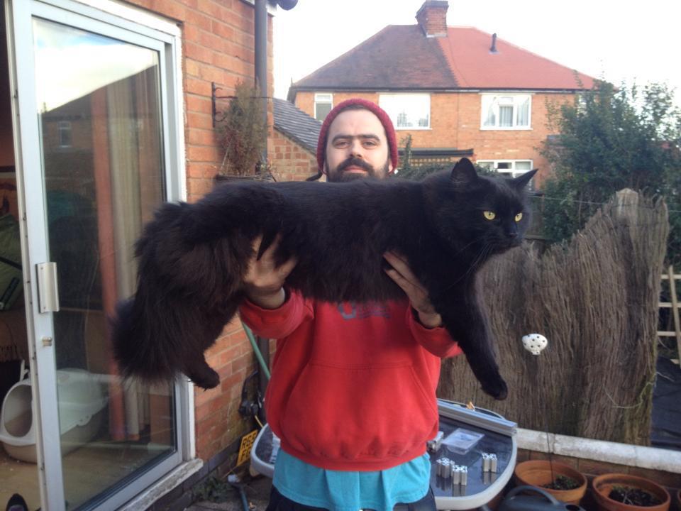 Αποτέλεσμα εικόνας για giant cats