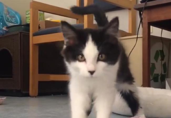 stop cat peeing outside litter box