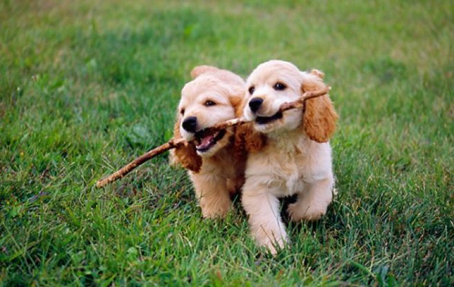 Image result for dogs playing fetch